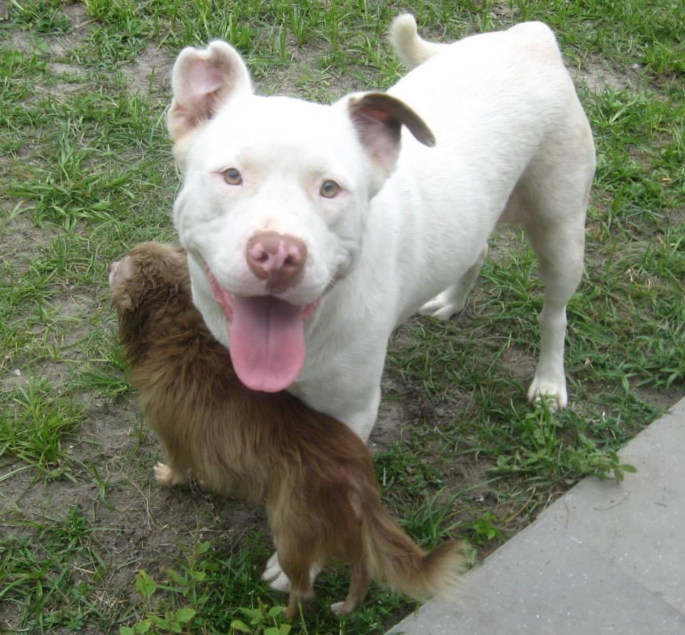 O cãozinho Chachi se sente protegido perto da cadela Jonie. (Foto: Reprodução / Facebook / Savannah-Chatham Metropolitan Police Department)