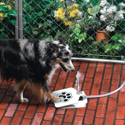 Bebedouro para cachorros. (Foto: Reprodução / Amazon / API)