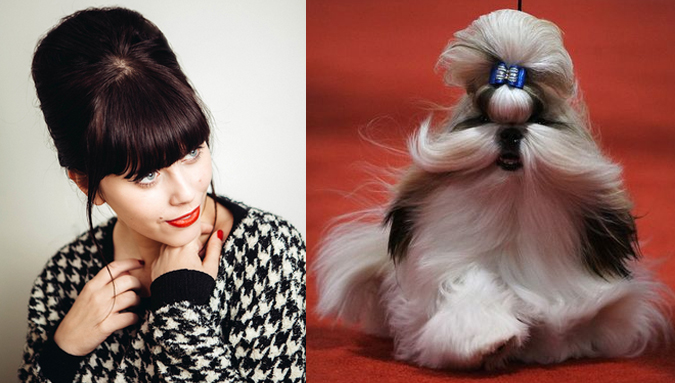 behive-cabelo-cachorro-penteado