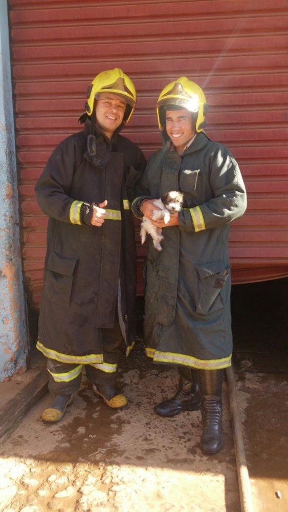 Os bombeiros salvaram a vida desses cães. (Foto: Reprodução / Facebook / Corpo de Bombeiros Militar do Estado de Goiás)