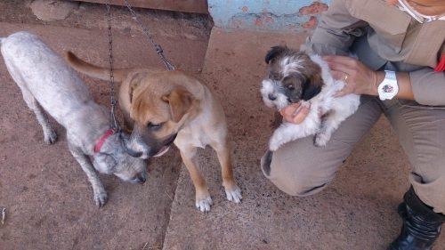 Os filhotes foram resgatados pelos bombeiros durante um incêndio. (Foto: Reprodução / Facebook / Corpo de Bombeiros Militar do Estado de Goiás)