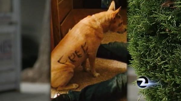 """Cachorra é abandonada com a palavra """"livre"""" escrita em seu corpo. (Foto: Reprodução / Dogster)"""