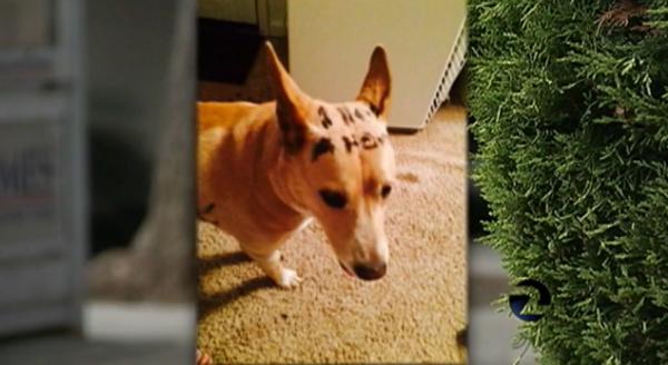 """A cadela estava com um recado na cabeça """"preciso de um lar"""".  (Foto: Reprodução / Dogster)"""