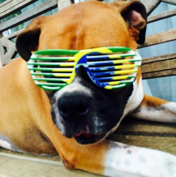 O cão de Paolla Oliveira está no clima da Copa do Mundo. (Foto: Reprodução / Instagram)