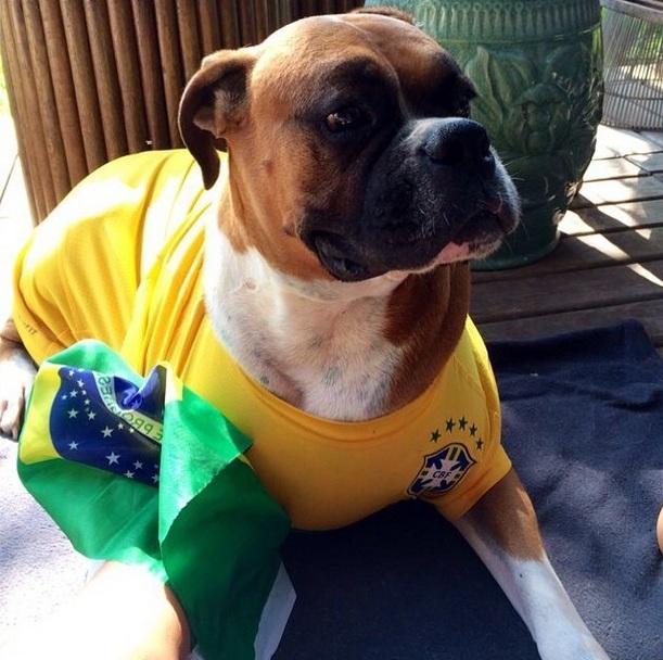 O cachorro Ajah vestiu a camisa do Brasil. (Foto: Reprodução / Instagram)