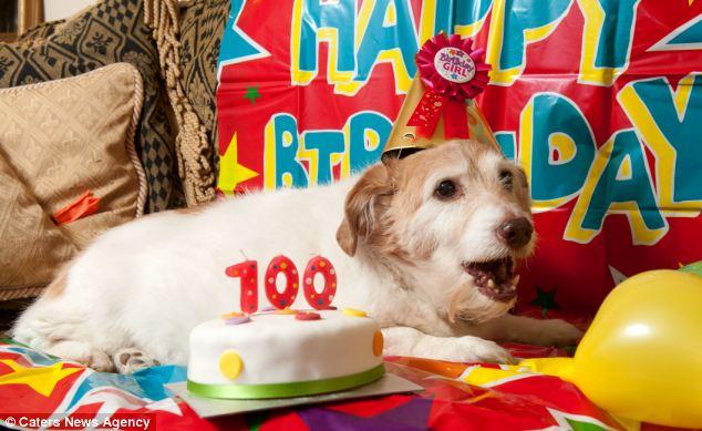 A cachorra Daisy comemorou 100 anos de vida no ano passado. (Foto: Reprodução / Daily Mail uk)