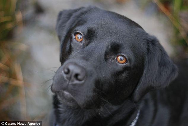 Ruby precisa de alguns cuidados especiais por causa de suas alergias. (Foto: Reprodução / Daily Mail uk)