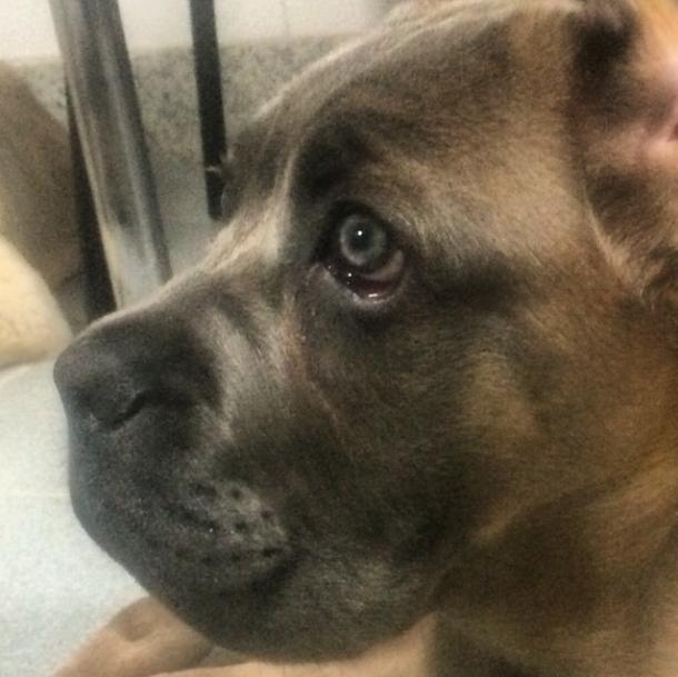 A nova cachorra de Andre Marques se chama Thora. (Foto: Reprodução / Instagram)