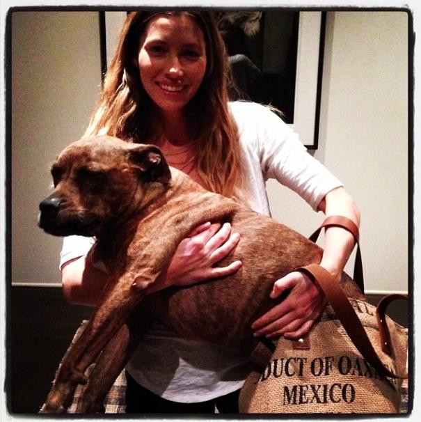 Jessica Biel com sua cachorra Tina no colo.