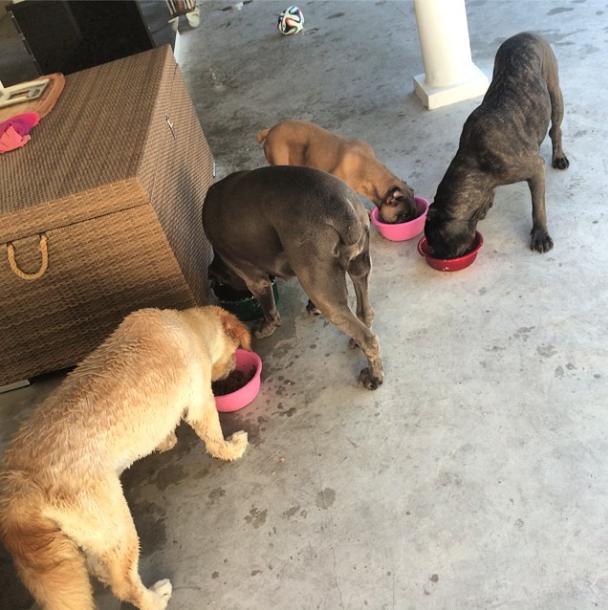 Todas as cachorras de Andre Marques: Cuca, Gorda, Thora e Banha. (Foto: Reprodução / Instagram)