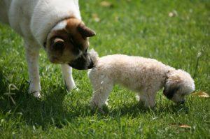 Por que os cachorros cheiram o rabo uns dos outros? (Foto: Reprodução / Google)