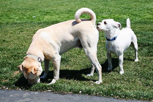 Pode parecer estranho para os humanos, mas essa é uma forma de comunicação entre os cães. (Foto: Reprodução / Google)