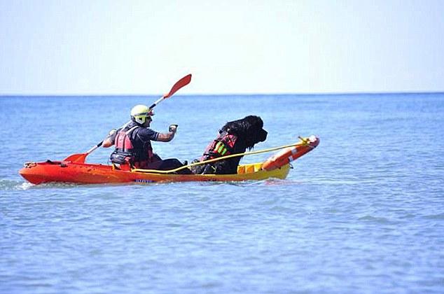 O cachorro Bruno trabalha como guarda-vidas com seu tutor. (Foto: Reprodução / Daily Mail uk)