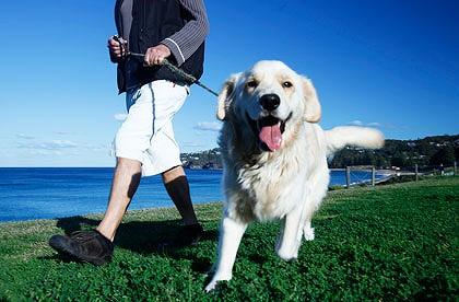 Ter um cachorro é bom para todos. (Foto: Reprodução / Google)