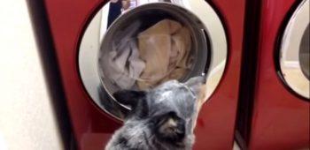 cachorro-pato-pelucia-maquina-lavar-video