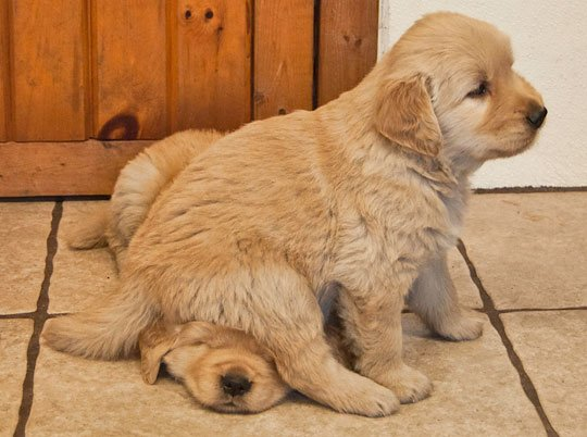 (Foto: Reprodução / Bark Post / A Place To love Dogs)