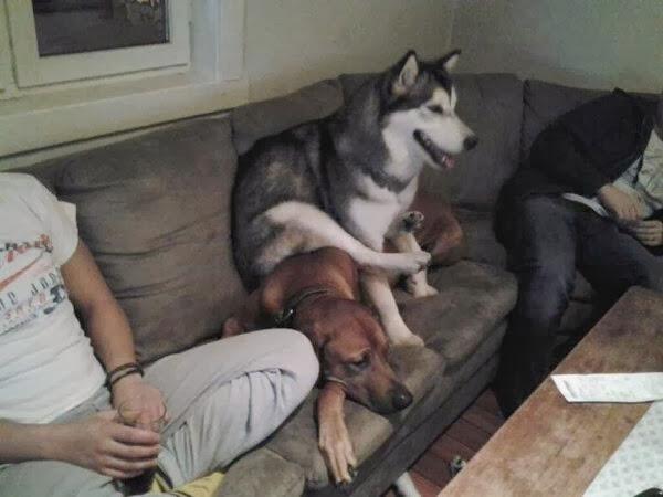 (Foto: Reprodução / Bark Post / Amazing Creatures)