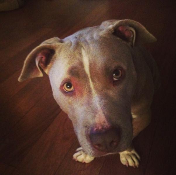 Xavier com olhar pidão. (Foto: Reprodução / Instagram)