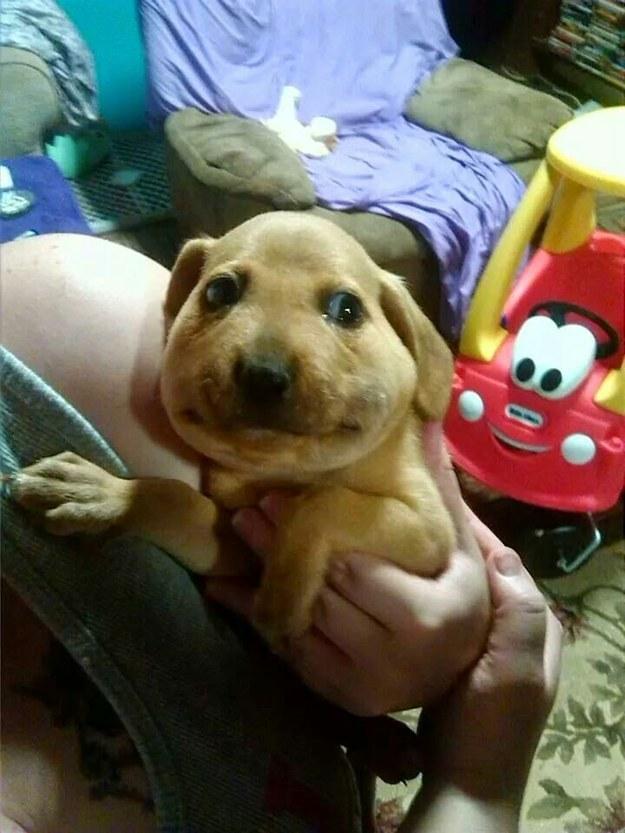 cachorros-abelhas-picada-01