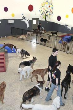 Estudo sugere que os cães gostam de ficar em hotéis. (Foto: Reprodução / Daily Mail UK)