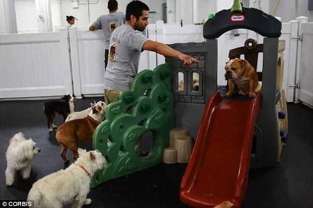 Os cachorros também gostam de férias. (Foto: Reprodução / Daily Mail UK)