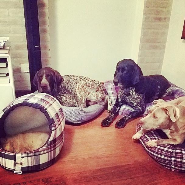 (da esquerda para a direita) Lobato, Farofa, Bisteca e Xavier.  (Foto: Reprodução / Instagram)