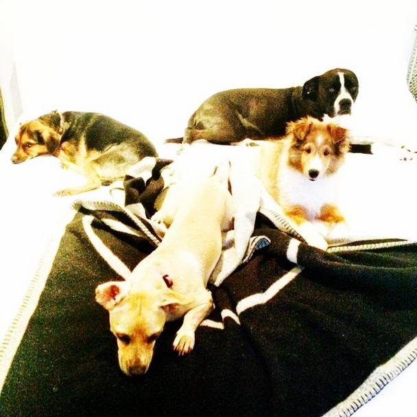 Todos os cachorros da cantora: Emu, Mary Jane, Bean e Happy. (Foto: Reprodução / Instagram)