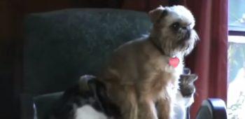 cachorros-gatos-sentando-em-cima-video