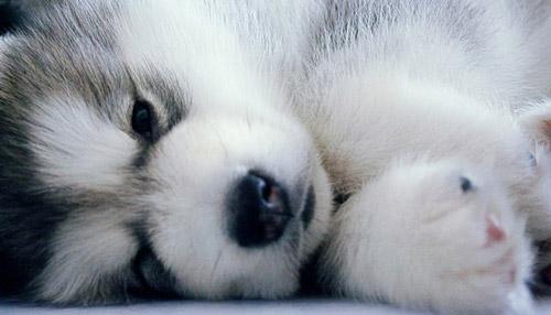 cachorros-quase-dormindo (1)
