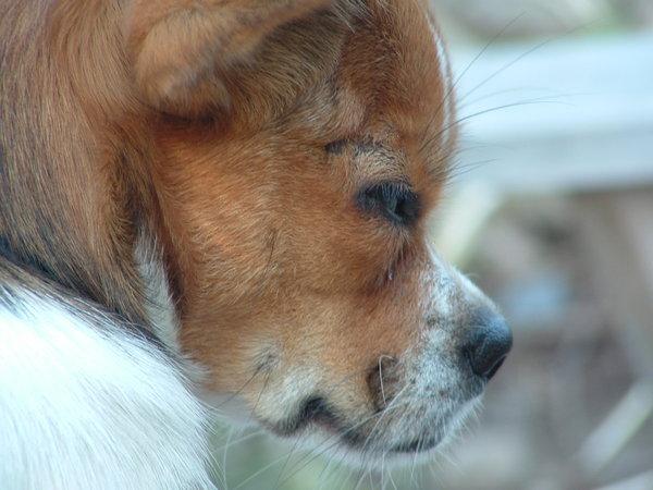 cachorros-quase-dormindo (12)