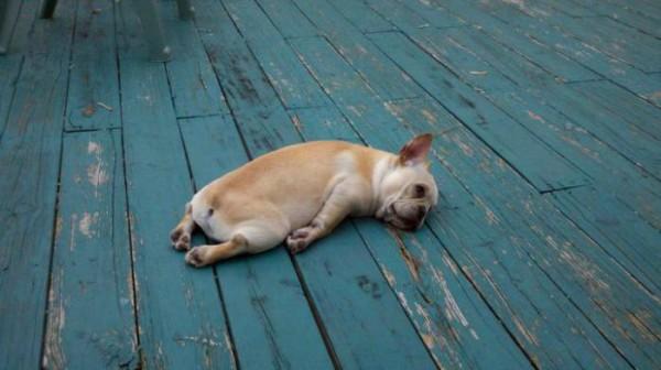 cachorros-quase-dormindo (4)