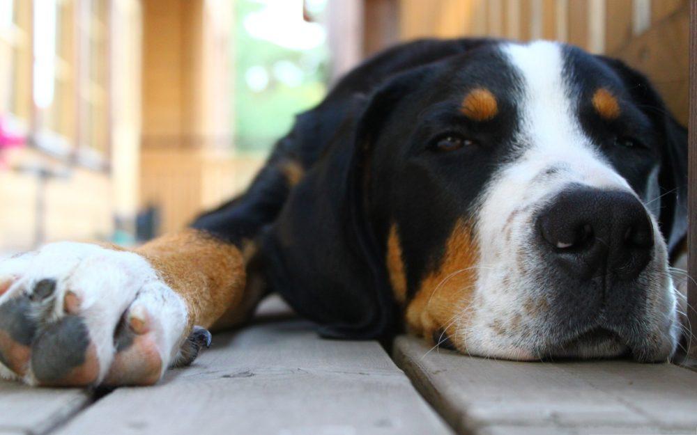 cachorros-quase-dormindo (5)