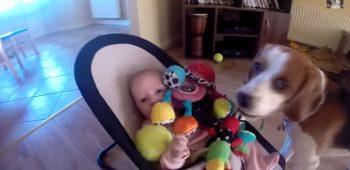 charlie-bebe-video-engracado-cachorro-brinquedos-desculps