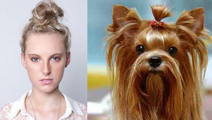 coque-mulher-yorkshire-terrier-penteado