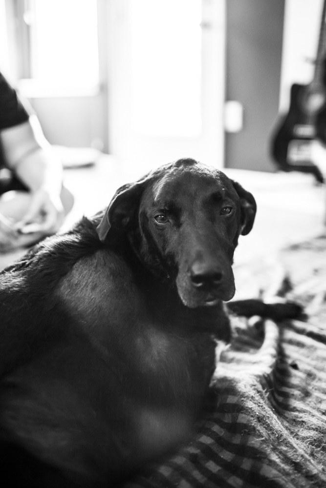 duke-robyn-arouty-cachorro-ensaio-eutanasia-05