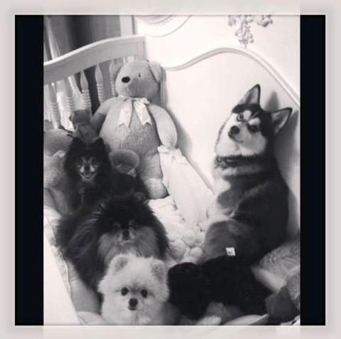Sharon e Ozzy Osbourne têm vários cães. (Foto: Reprodução / Instagram)