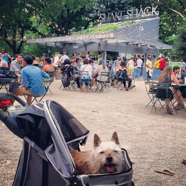 James levou o cão para sua hamburgueria preferida. (Foto: Reprodução / Buzzfeed)