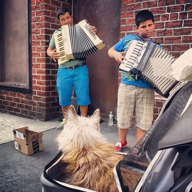 E até curtiu o som de artistas de rua. (Foto: Reprodução / Buzzfeed)