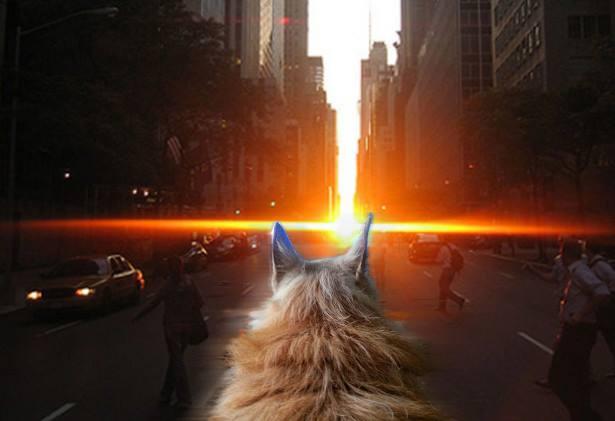 O cão viu o pôr-do-sol em Manhattan. (Foto: Reprodução / Buzzfeed)