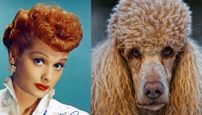 lucille-ball-penteado-poodle
