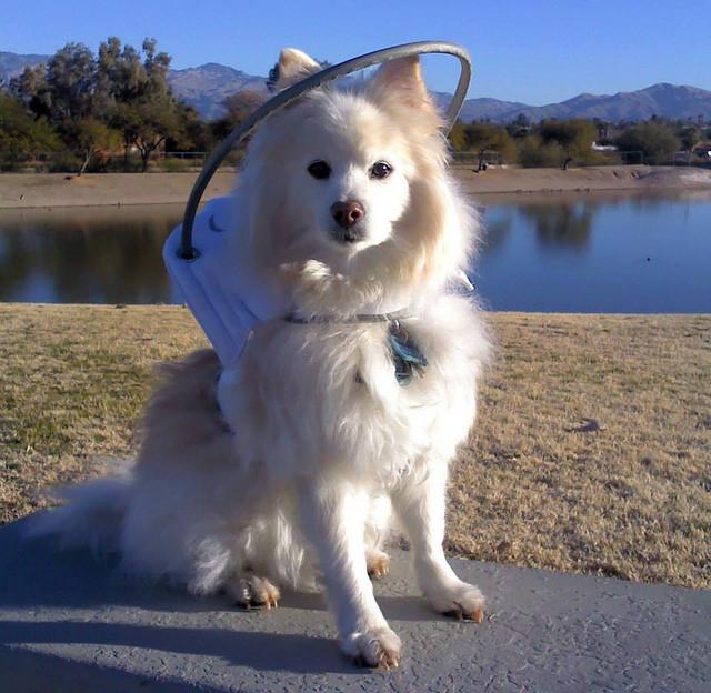 Cachorro usando o Muffin's Halo. (Foto: Reprodução / Muffin's Halo)