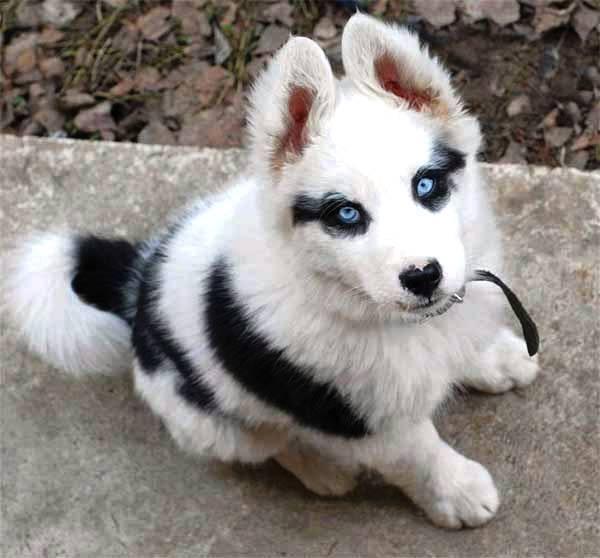 pelagem-cachorros-diferente- (11)