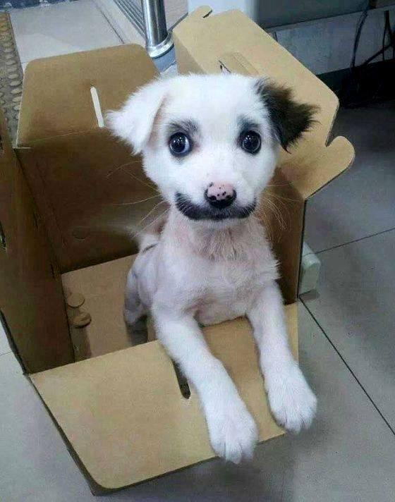 pelagem-cachorros-diferente- (12)