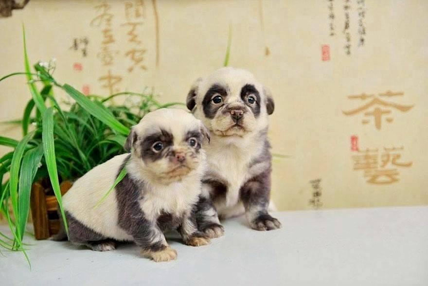 pelagem-cachorros-diferente- (14)