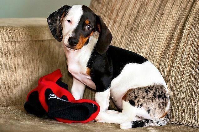 pelagem-cachorros-diferente- (18)