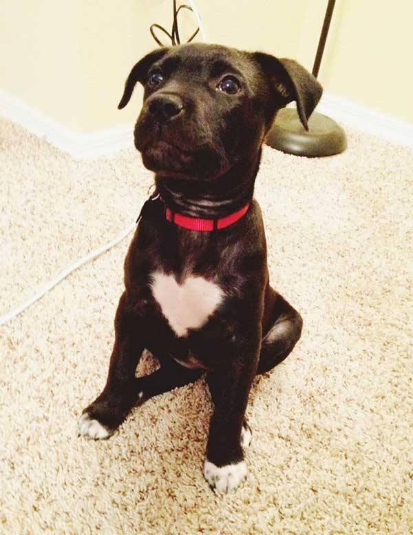 pelagem-cachorros-diferente- (5)