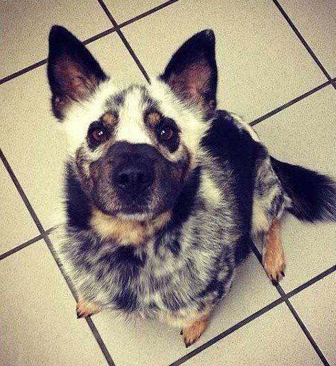 pelagem-cachorros-diferente- (8)