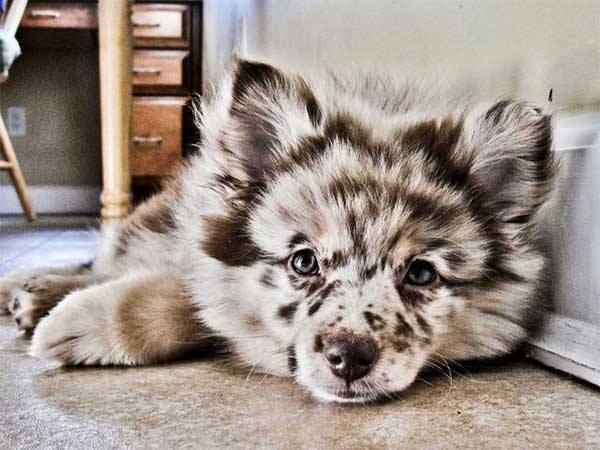 pelagem-cachorros-diferente- (9)