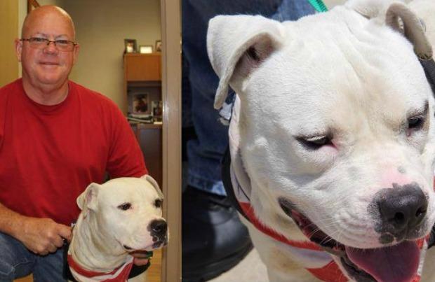O sargento adotou o cachorro após resgata-lo pela segunda vez. (Foto: Reprodução / Pet 360)