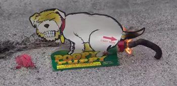 poopy-puppy-video-engracado-bombinha-cachorro